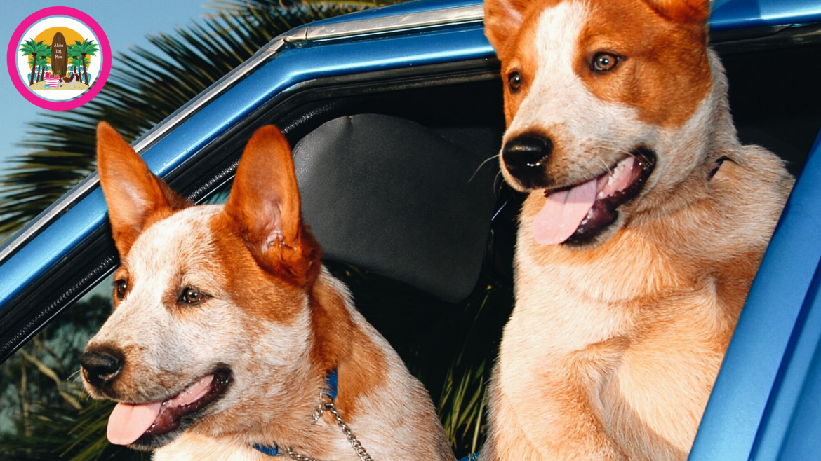 Dog Road Rules…Dog Car Safety Need to Know