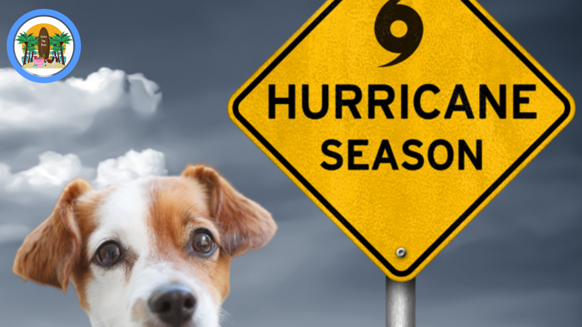 Are Your Dogs Ready for Hurricane Season?