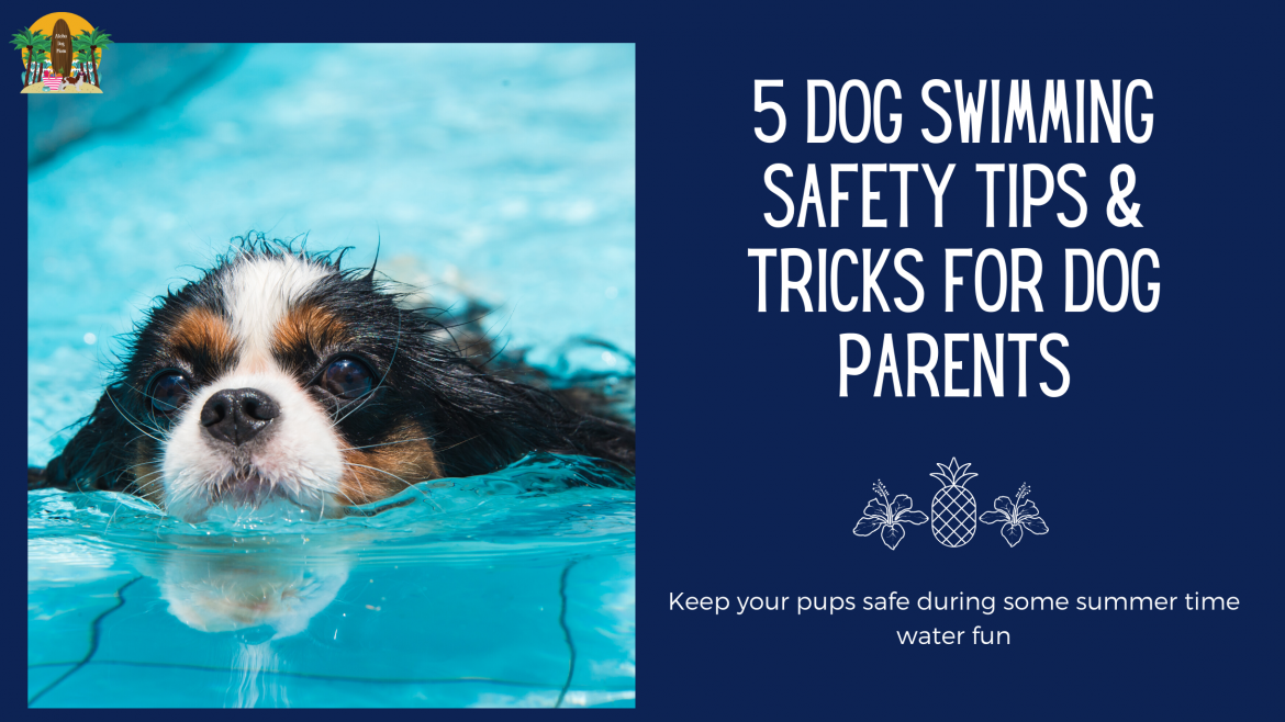 5 Things You Need to Know About Dog Swimming Safety