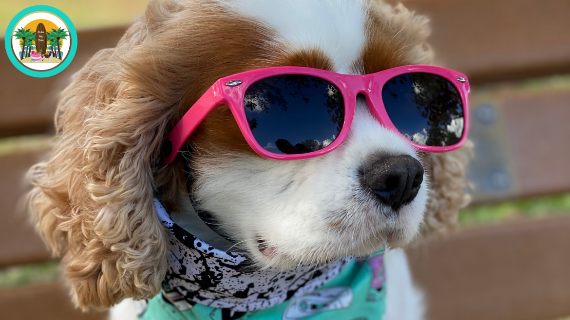 When the Future's So Bright, Your Dog Needs Some Shades