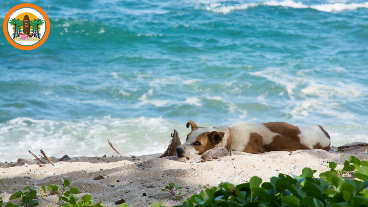 How Can Saltwater Hurt Your Dog? Beach Safety Tips for Dog Parents