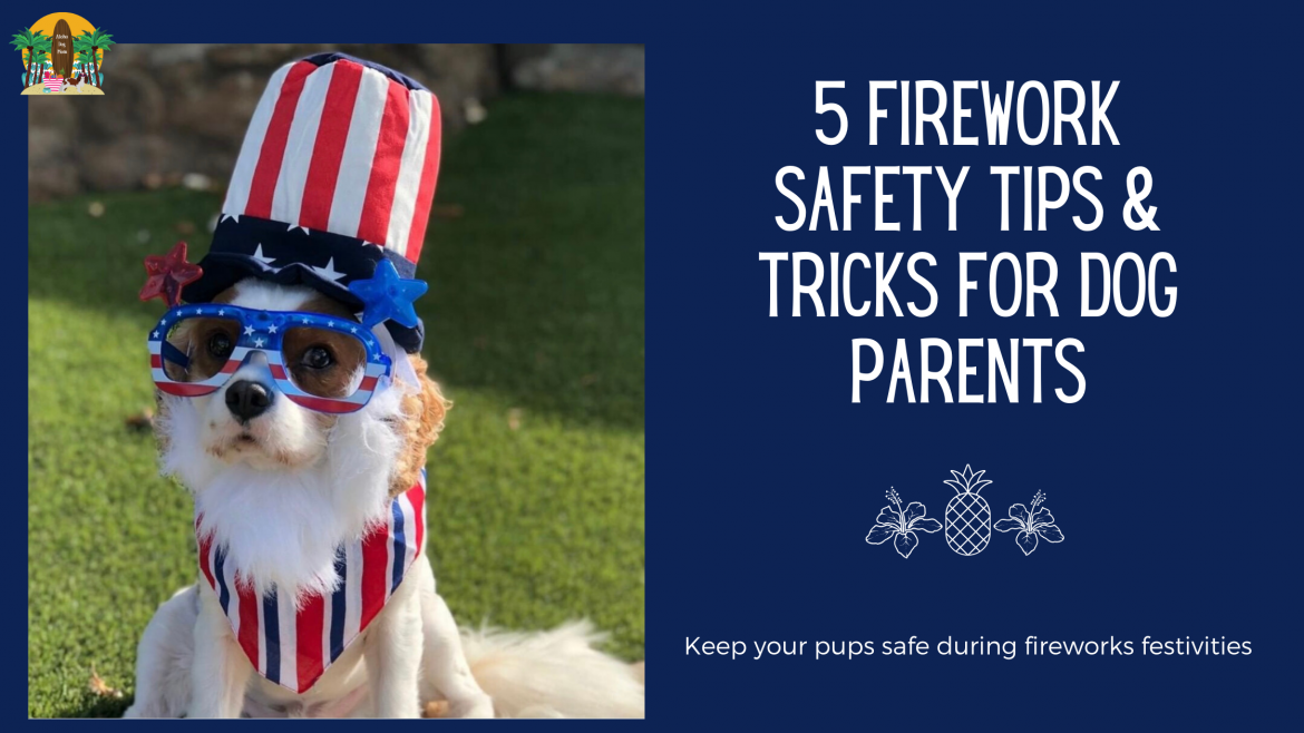 5 Fireworks Safety Tips & Tricks for Dog Parents