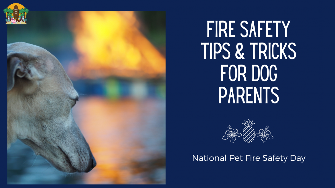 Fire Safety Tips & Tricks for Dog Parents: National Pet Fire Safety Day