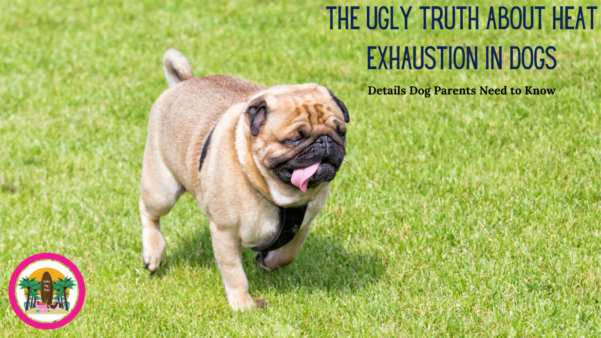 The Ugly Truth About Heat Exhaustion in Dogs