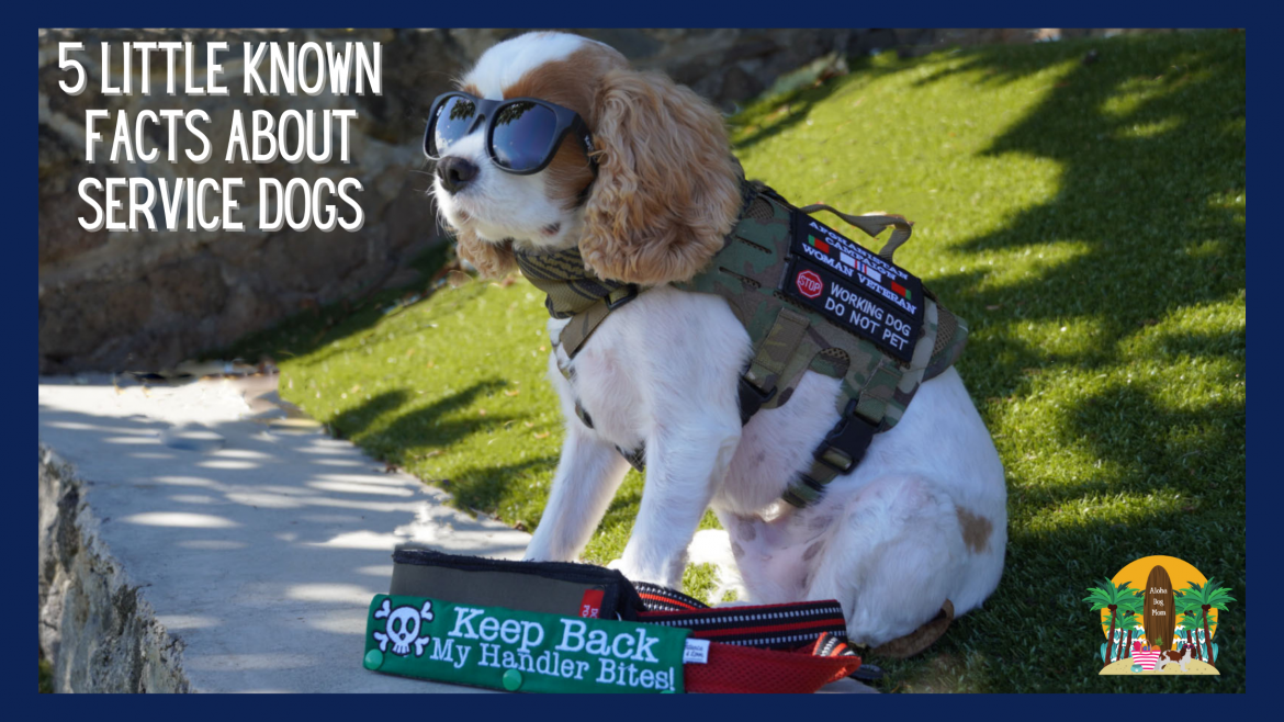 Five Little Known Facts About Service Dogs