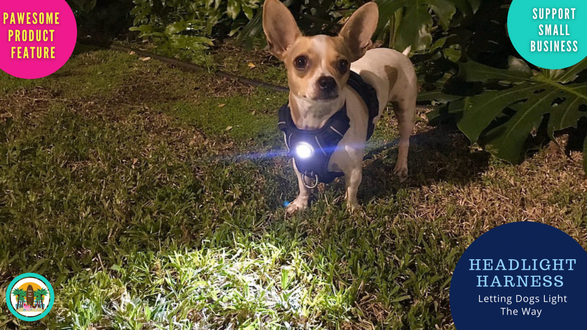 Letting Dogs Light the Way: Headlight Harness