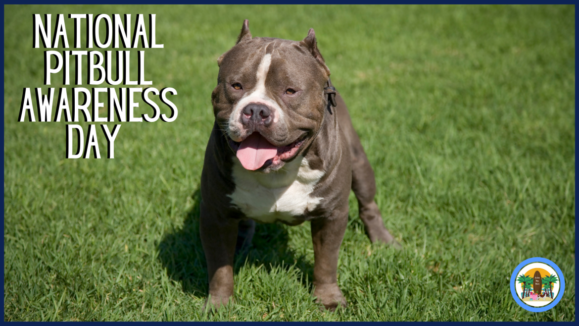 National Pitbull Awareness Day: 5 Fun Facts About Pitbulls