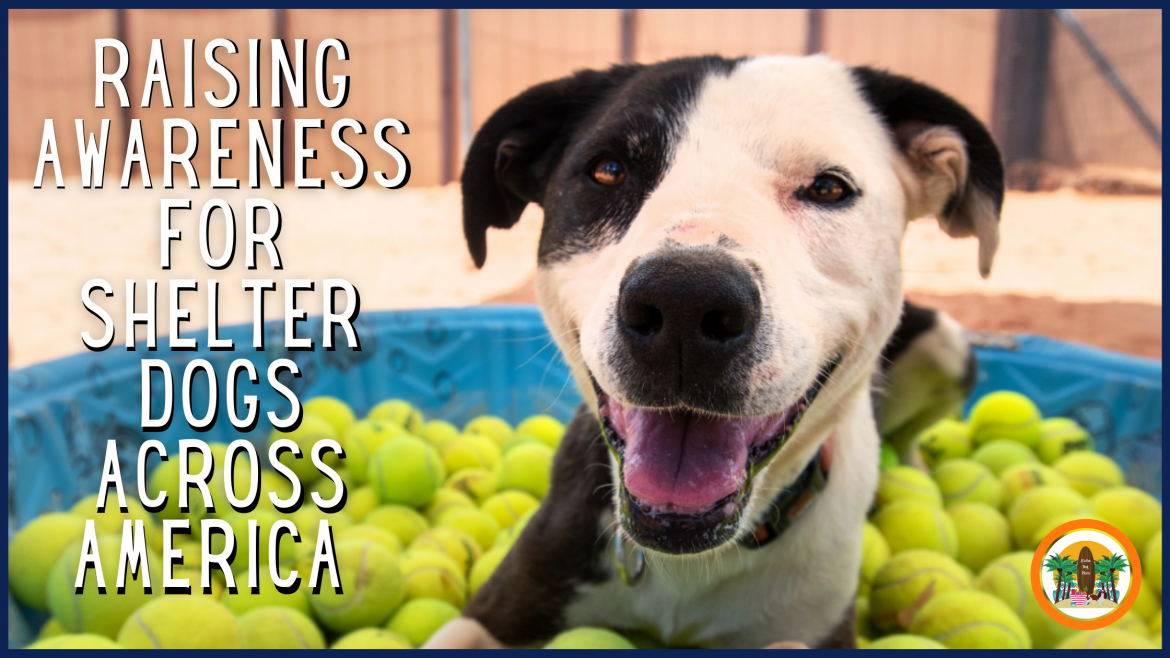 Raising Awareness for Shelter Dogs Across America