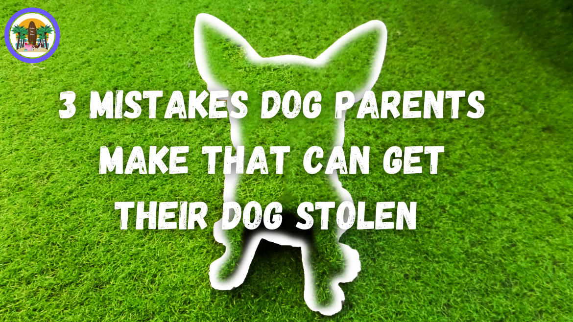 3 Mistakes Dog Parents Make That Can Get Their Dog Stolen: Pet Theft Awareness Day