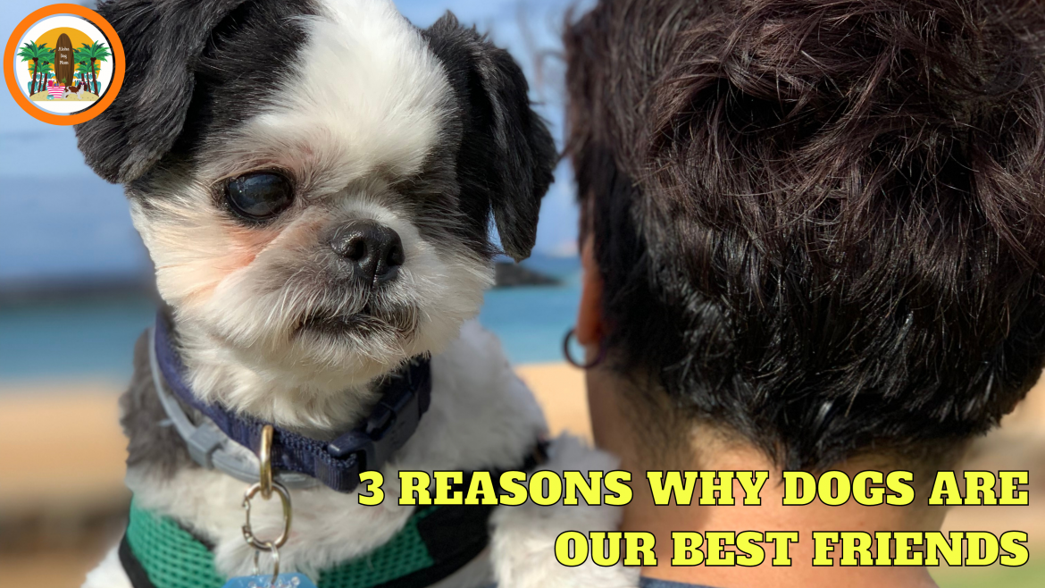3 Reasons Why Dogs Are Our Best Friends: Best Friends Day