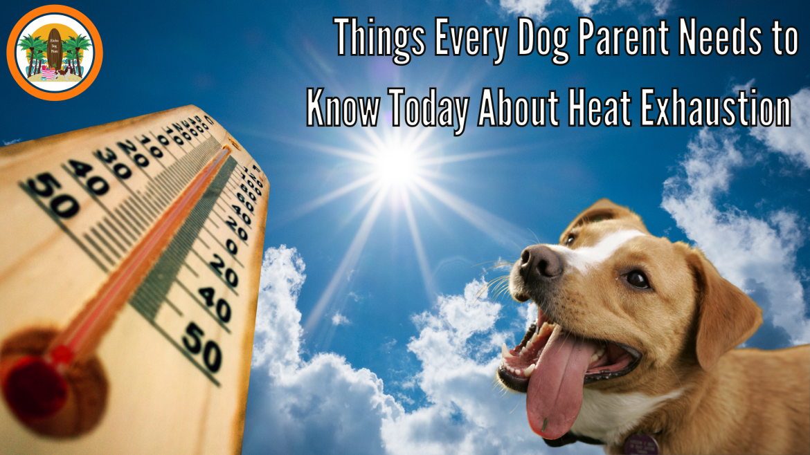 Things Every Dog Parent Needs to Know Today About Heat Exhaustion
