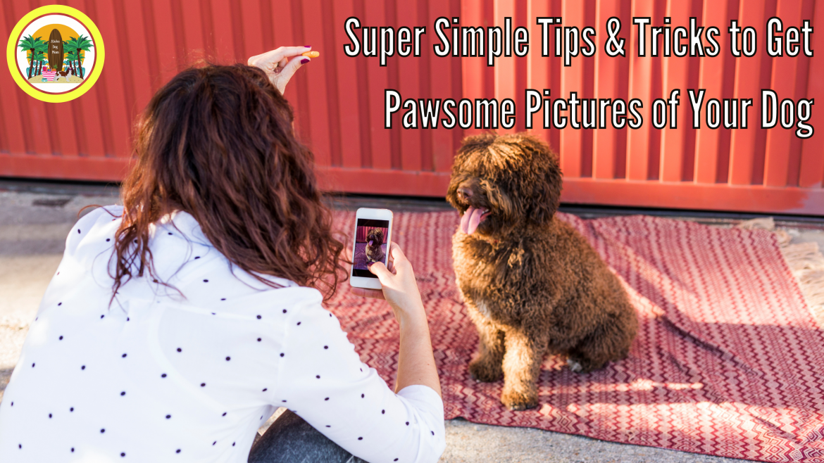 Super Simple Tips & Tricks to Get Pawesome Pictures of Your Dog